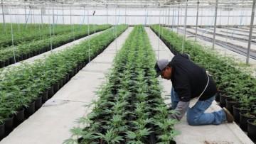 Docente FCA disertará en seminario sobre cannabis en la UNCUYO