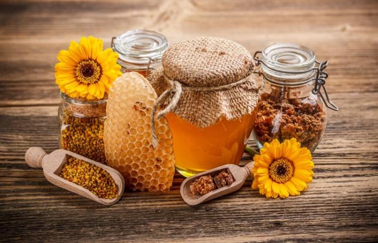 Estudiantes podrán cursar optativas de apicultura