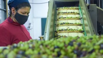 Comprometidos con la alimentación mundial: aportes de Ciencias Agrarias