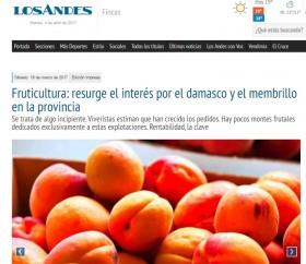 Fruticultura: resurge el interés por el damasco y el membrillo en la provincia