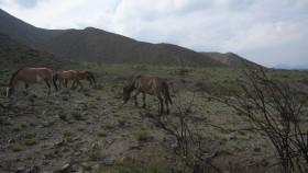 Restaurarán la flora de montaña para mitigar el riesgo de aluviones