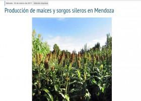 Producción de maíces y sorgos sileros en Mendoza