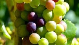 Cursado Presencial Tecnicatura Universitaria en Enología y Viticultura