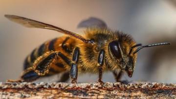Inscriben para optativas de apicultura